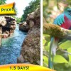 """2-Day Trip: """"Coffee, Canyon, and Cloud Forest"""""""