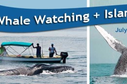 Humpback Whale Watching – Jul-Oct