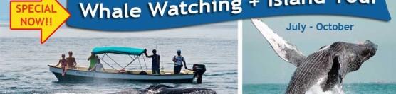 Humpback Whale Watching – Jul-Oct