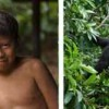 Monkey Island, Lake Gatun, and Indigenous Village