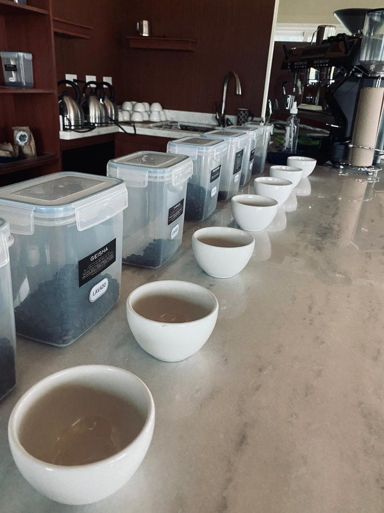 Variety of Coffee Tasting