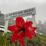 African Beds