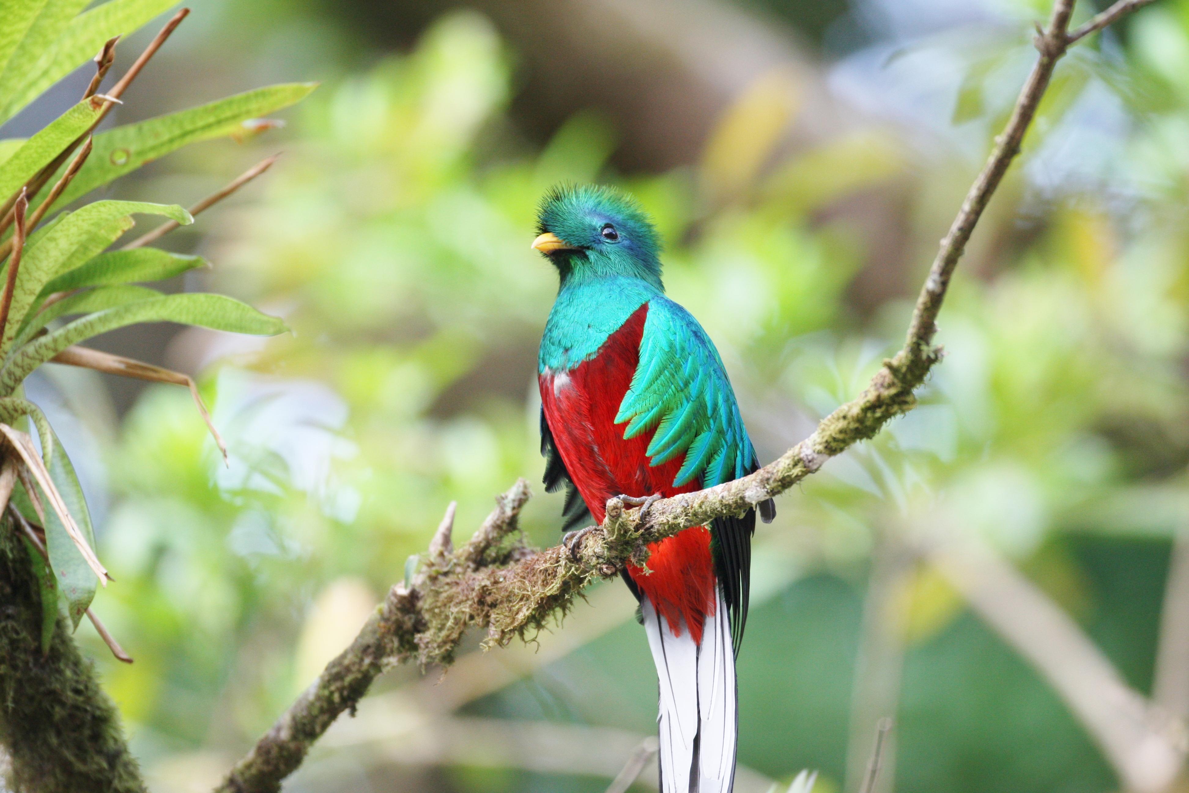 Rainforest Birds Flying Bird Watching Tour Pan...