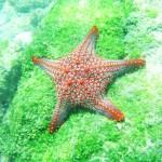 panama snorkeling, sea kayaking, isla bolanos, golfo de chiriqui national park, boquete, island tour, pacific ocean