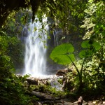 waterfall, boquete, panama, hiking, cloud forest