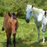horses, hiking, panama