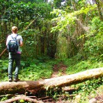 quetzal trail, waterfall, boquete, panama, hiking, cloud forest