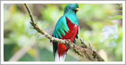 bird watching, birding, resplendent quetzal, boquete, hiking, cloud forest, panama