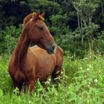 horseback riding, boquete, panama