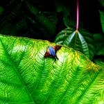 butterfly, panama