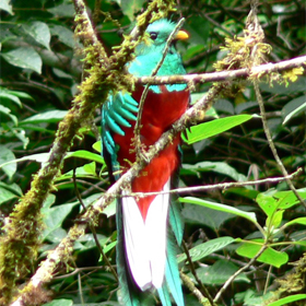 quetzal, hiking, birdwatching, zip line, boquete, panama, vacation