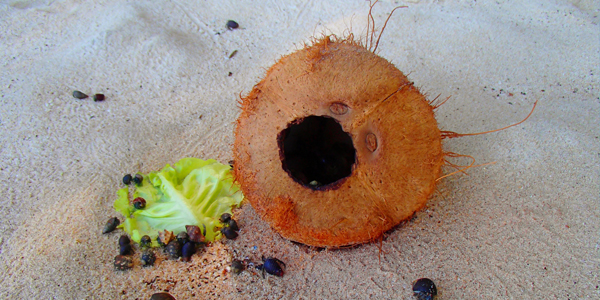 coconut, island trip, gulf of chiriqui national marine park, boquete, panama, boca chica, boca brava