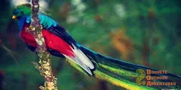 pipeline trail, quetzal, hiking, hike, cloud forest, Boquete, Quetzal Trail, Panama, birdwatching