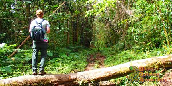 pipeline trail, quetzal, hiking, hike, cloud forest, Boquete, Quetzal Trail, Panama, birdwatching