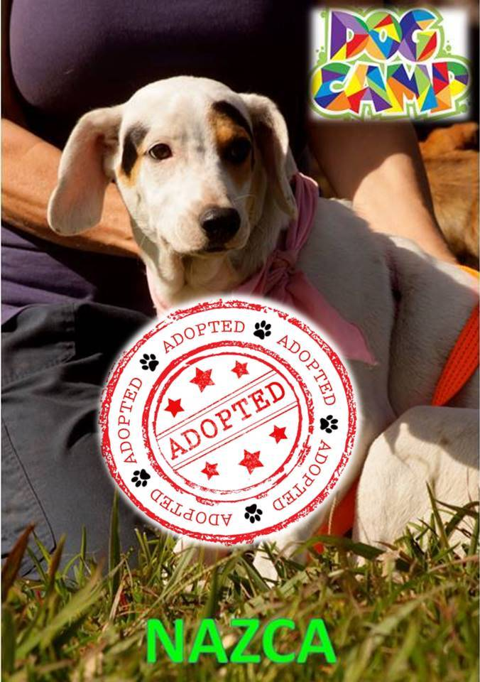 Dog Camp Boquete